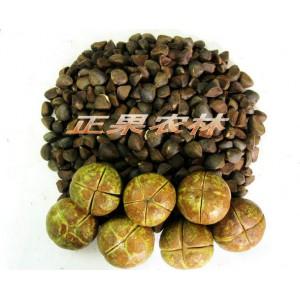 专业供应油茶种子-- 融安县正果生态农林工作站