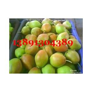 陜西大荔冷庫紅香酥梨產地批發火熱銷售-- 陜西大荔水果瓜果基地合作社