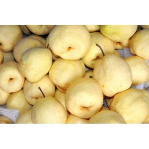 陜西酥梨供應優質批發零售-- 陜西自然林商貿有限公司