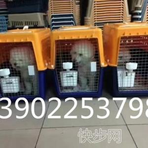 宠物托运  国内空运  观赏鱼空运 鸽子空运-- 广州航胜通贷运代理有限公司