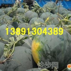 陜西大棚黑無籽西瓜產地價格,大棚黑無籽西瓜產地銷售價格-- 陜西大荔水果瓜果基地合作社