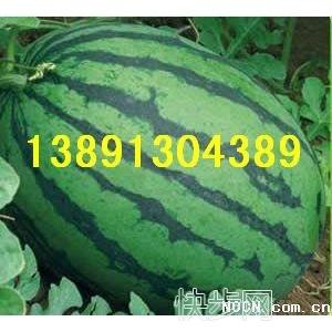 陜西西瓜基地價格,長花瓜,花皮西瓜,抗五西瓜產地價格-- 陜西大荔水果瓜果基地合作社