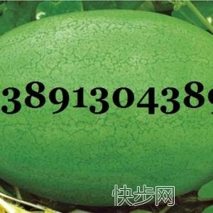 陜西特大新紅寶西瓜產地價格,新紅寶西瓜基地批發價格-- 陜西大荔水果瓜果基地合作社