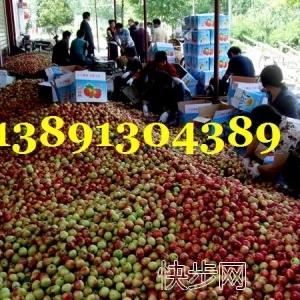 陜西油桃價格,中油5,中油9,中油12油桃產地批發價格-- 陜西大荔水果瓜果基地合作社
