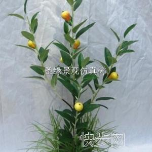 餐厅仿真橄榄叶果树内贸仿真橄榄叶果树美化-- 广州市庆缘景观园林设计有限公司
