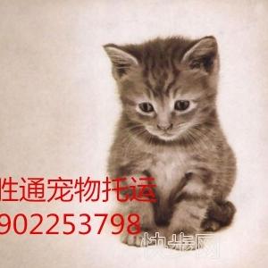 宠物托运  国内空运  火车宠物托运-- 广州航胜通贷运代理有限公司