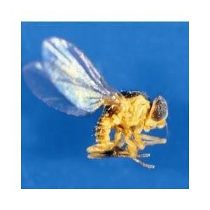 杀螨剂特效药 杀虫特效药专杀斑潜蝇