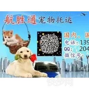 宠物托运  国内空运  火车宠物托运  白云机场荔枝空运-- 广州航胜通贷运代理有限公司