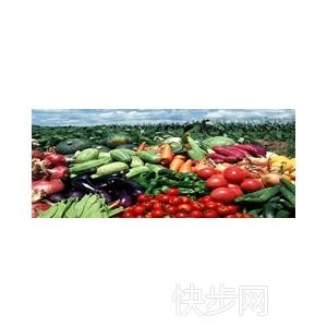 溫室西紅柿葉面施肥注意什么-- 青島市豪豐蔬菜專業合作社
