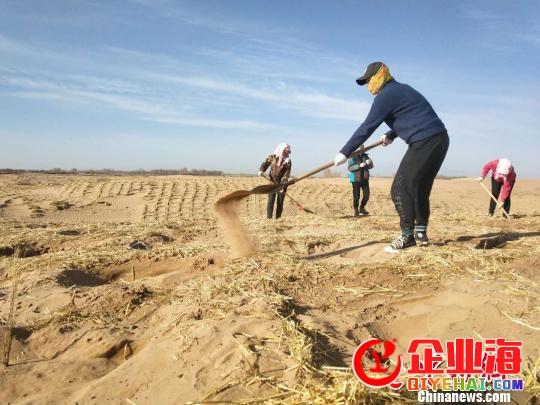 """甘肃武威立法推进""""防沙治沙""""管理荒漠"""